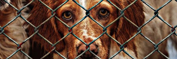 conviértete en un voluntario perro en una jaula - Conviértete en un voluntario: ¡Cambia una vida!