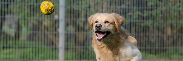 conviértete en un voluntario perro jugando - Conviértete en un voluntario: ¡Cambia una vida!