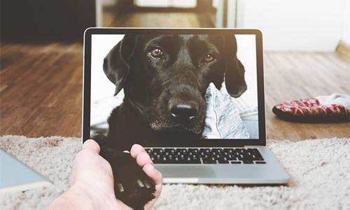 """padres de perros control remoto - Webs que todos los """"padres de perros"""" deben conocer"""
