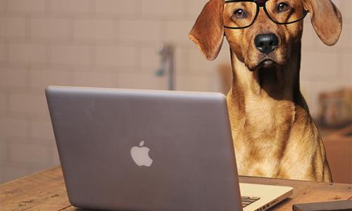 """padres de perros perro portátil - Webs que todos los """"padres de perros"""" deben conocer"""