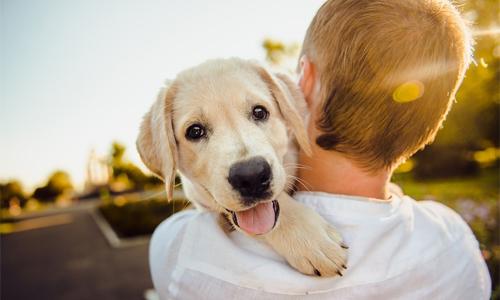 beneficios para mascotas perro cargando - Los beneficios de tener una mascota