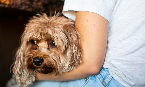 beneficios para mascotas perro descansando - Los beneficios de tener una mascota