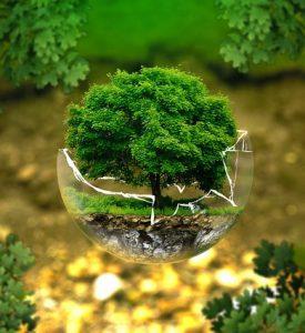 árbol ecología 275x300 - Formas en que puedes contribuir a los esfuerzos contra la deforestación