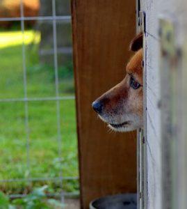 Refugio para perros 269x300 - Formas interesantes de recaudar fondos para refugios para animales