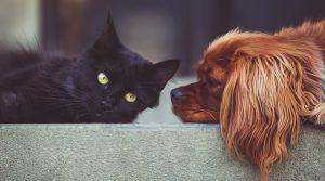 animales mascotas 300x167 - ¡No compres animales, mejor adopta!