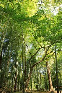 bosque 200x300 - Formas en que puedes contribuir a los esfuerzos contra la deforestación