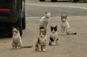 gatos callejeros 300x199 - ¿Por qué castrar a tu mascota?