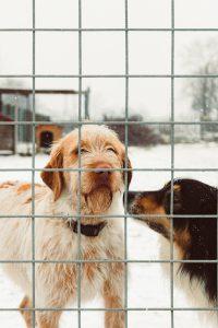 perro 200x300 - Formas interesantes de recaudar fondos para refugios para animales