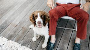 perro mascota 300x169 - ¿Por qué castrar a tu mascota?