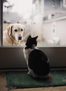 mascotas en casa 219x300 - Cosas a considerar antes de obtener una mascota